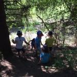 Wald Wandern 2